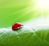 листья ladybird стоковая фотография