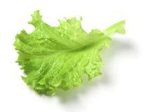 листья lattuce Стоковое Изображение