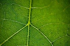 листья macro2 Стоковая Фотография RF