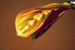 листья multicolor Стоковое Изображение RF
