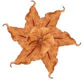 листья patern Стоковая Фотография RF