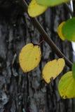 листья s осени стоковое изображение