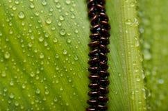 листья s яичка бабочки свежие зеленые Стоковое Фото