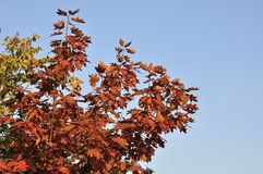 Листья Sutumn Стоковое Изображение RF