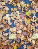 Листья Utumn Стоковые Изображения RF
