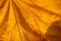 листья v Стоковая Фотография RF