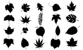 Листья vector комплект Стоковое Фото