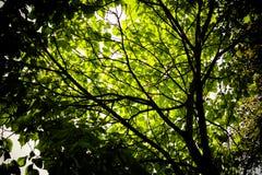 Листья witih дерева Стоковая Фотография RF