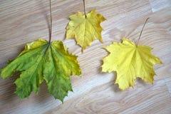 3 листь без бежа предпосылки Стоковое Изображение