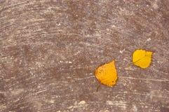 2 листь осени желтых на поверхности распылили с бежевой краской Стоковая Фотография RF