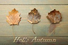 3 листь осени сухих Стоковое фото RF