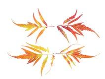 4 листь пары смотря на справедливо и налево на белизне изолировали предпосылку Стоковые Фото