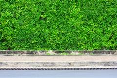 Листь-покрытая стена Стоковое Фото