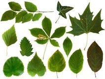 2 листь собрания Стоковые Фото