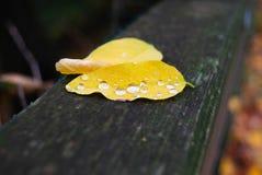 2 листь с идти дождь падения Стоковые Фотографии RF