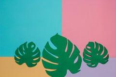 3 листь monstera Стоковое фото RF