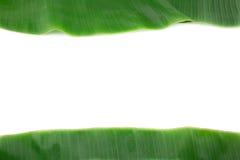 Лист банана на белизне с космосом экземпляра Стоковые Изображения