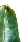 Лист банана на белой предпосылке Стоковое Изображение RF