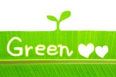 Лист банана пишут зеленый цвет и рисуют росток Стоковое Изображение