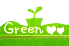 Лист банана пишут зеленый цвет и рисуют росток Стоковая Фотография