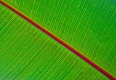 Лист банана Стоковое Изображение RF