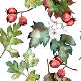 Лист боярышника зеленые Листва ботанического сада завода лист флористическая Безшовная картина предпосылки Стоковые Изображения RF