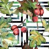 Лист боярышника зеленые Листва ботанического сада завода лист флористическая Безшовная картина предпосылки Стоковые Фото