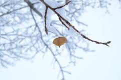 Лист Брауна в зиме стоковые изображения rf