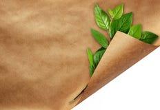Лист бумаги ремесла с завитыми листьями угла и зеленого цвета Стоковое Изображение RF