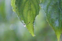 Лист весны в дожде Стоковое Фото