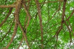 Лист ветви дерева красивые в лесе на взгляде белой предпосылки нижнем стоп дня мировой окружающей среды концепции разрушает перед стоковое фото