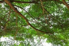 Лист ветви дерева красивые в лесе на взгляде белой предпосылки нижнем стоп дня мировой окружающей среды концепции разрушает перед стоковые фотографии rf
