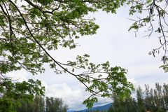 Лист ветви дерева красивые в лесе на взгляде белой предпосылки нижнем стоп дня мировой окружающей среды концепции разрушает перед стоковое изображение