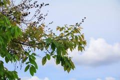 Лист ветви дерева красивые в лесе на взгляде белой предпосылки нижнем стоп дня мировой окружающей среды концепции разрушает перед стоковое изображение rf