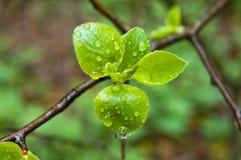 лист ветви Стоковая Фотография RF