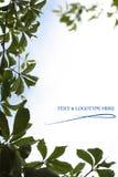 лист виноградины 3 кадров Стоковые Изображения