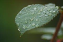 Лист воды Стоковые Изображения