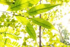 Лист в лесе Стоковые Изображения RF