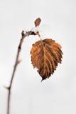 Лист в зиме стоковая фотография