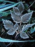 Лист в изморози Стоковое фото RF