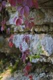 Лист вдоль естественной взбираясь трассы Стоковая Фотография RF