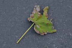 Лист в парке Стоковое Изображение