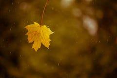 Лист в падении дождя Стоковые Фото