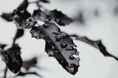 Лист в падениях росы Стоковое Фото