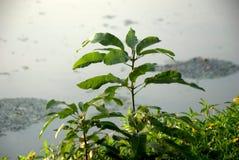 Лист в поле Стоковая Фотография RF