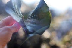 Лист в солнечном свете Стоковые Фото