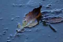 Лист в лужице Стоковое Изображение