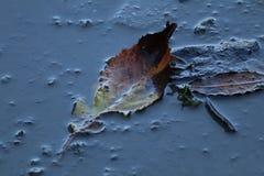 Лист в лужице Стоковые Фото