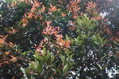 Лист дерева в саде Стоковые Изображения RF