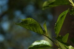 Лист дерева в саде Стоковое Фото